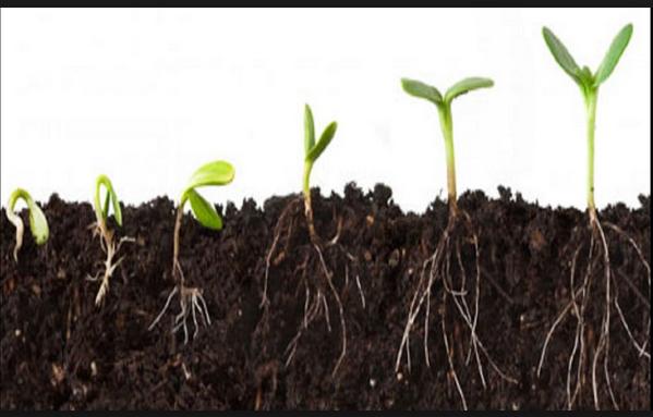 faktor yang mempengaruhi pertumbuhan kecambah